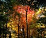 Время золотой осени